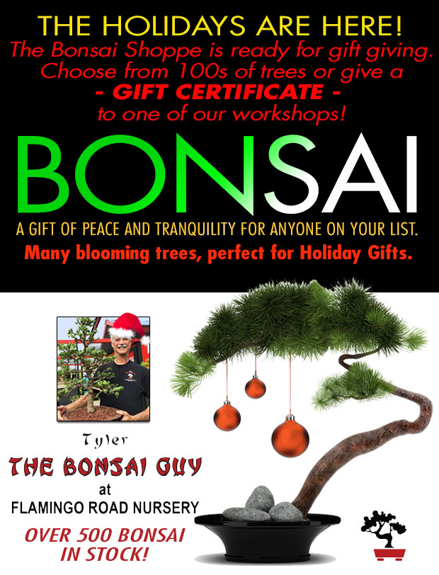 Bonsai makes a great Holiday gift! Over 500 in stock! Give the gift of peace and tranquility.