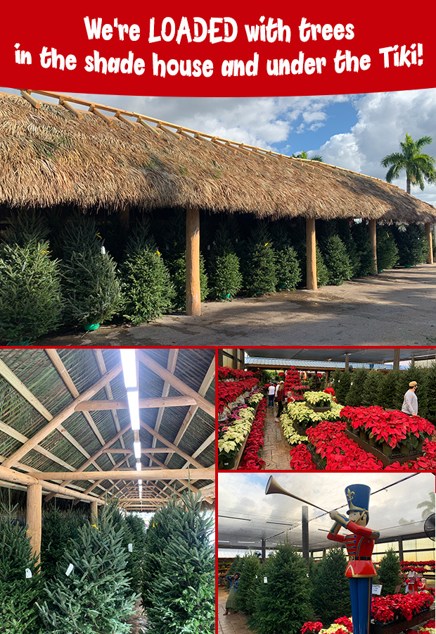 We are LOADED with trees in the tiki and the shade house!