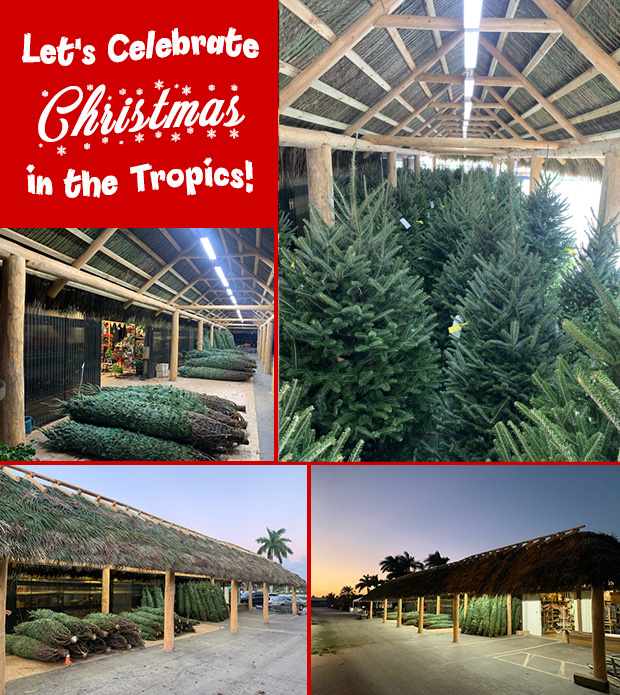 Let's Celebrate Christmas in the Tropics! Visit out new Christmas tree tiki!