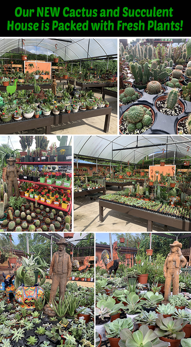 Our new cactus and succulent house is packed with fresh plants!