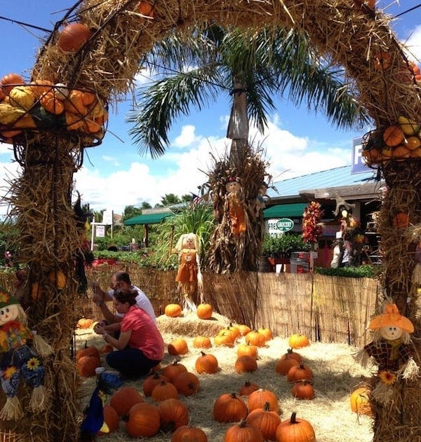 Flamingo Road Nursery Is Excited To Host Our Annual Fall Festival Each Year From The End Of September First Week November