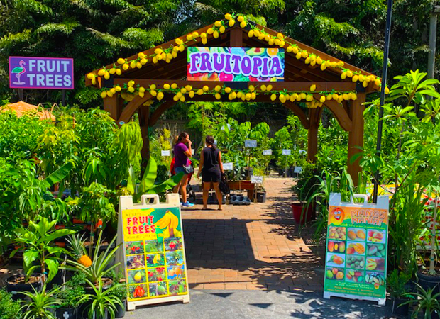 Welcome to FRUITOPIA. Best selection of fruit and citrus trees in N Broward!